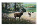 Germany - View of Stags in a Field Art by  Lantern Press