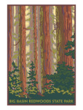 Big Basin Redwoods State Park - Forest View Print by  Lantern Press