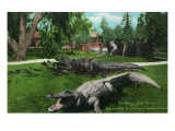 Los Angeles, California - Alligator Family at the Farm Posters