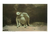 New York City, New York - Octopus at the Aquarium Premium giclée print van  Lantern Press