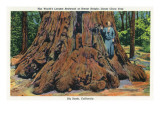 Big Basin, California - Woman Stands by Santa Clara Tree Affiches