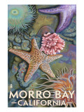 Morro Bay, CA - Tidepool Posters by  Lantern Press