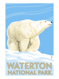 Waterton National Park, Canada - Polar Bear Prints by  Lantern Press