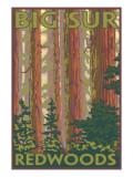 Big Sur, California - Redwoods Posters par  Lantern Press