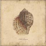 Conchas IV Pósters por Stephanie Marrott