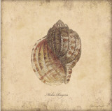 Shells IV Posters by Stephanie Marrott