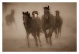 Sepia Horses Prints by Gary Crandall