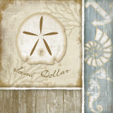 Sand Dollar Posters by Jennifer Pugh