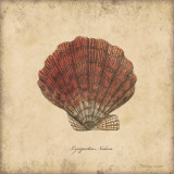 Shells II Print by Stephanie Marrott