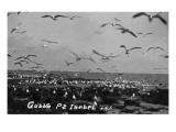 Port Isabel, Texas - Flocks of Gulls Prints by  Lantern Press