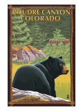Poudre Canyon, Colorado - Bear in Forest Affiches par  Lantern Press