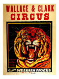 Wallace &amp; Clark Cirbus - Giant Siberian Tigers Poster, Circa 1945 Giclee Print