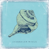 Whelk Prints by Stephanie Marrott