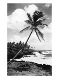 Hawaii - Palms along the Beach Poster von  Lantern Press