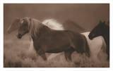 Sepia Horses Print by Gary Crandall
