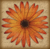 Orange Daisy Prints by Tony Stuart