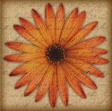 Orange Daisy Prints by Tony Stuart