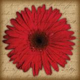 Red Gerbera Poster by Tony Stuart