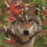 Autumn Encounter Poster av Collin Bogle