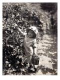 Kirkland Berry Farms, Baby Berry Picker, Undated Reproduction procédé giclée par Asahel Curtis