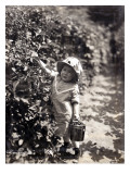Kirkland Berry Farms, Baby Berry Picker, Undated Giclee Print by Asahel Curtis