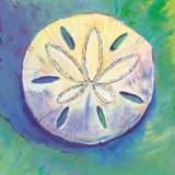 Sand Dollar Print by Scott Westmoreland