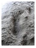 Petroglyph From Harstine Island, WA Giclee Print