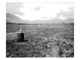 Little Girl on a Stump in an Area of Cleared Land Near Lake Chelan in Okanogan County, WA, 1914 Giclee Print by Asahel Curtis and Walter Miller