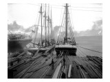 Loading Timber at Tacoma Mill, 1909 Giclee Print by Asahel Curtis