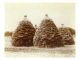 Haystacks, Circa 1900 Giclee Print