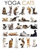 Yoga - Cats Plakaty