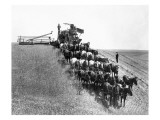 Horse-Drawn Team Wheat Farming Giclee Print by Asahel Curtis
