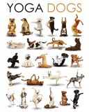 Yoga - Dogs Kunstdrucke