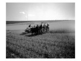 Tekoa, Four-Horse Team, 1915 Giclee Print by Asahel Curtis
