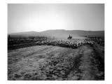 Flock of Sheep Near Ellensburg, WA, 1912 Giclee Print by Asahel Curtis