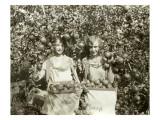 Girls with Apple Harvest, Yakima, 1928 Impression giclée par Asahel Curtis