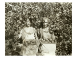 Girls with Apple Harvest, Yakima, 1928 Stampa giclée di Asahel Curtis