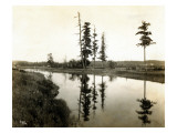 Treaty Trees at Medicine Creek, 1924 Giclee Print by Asahel Curtis