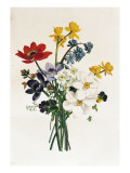 Bouquet of Narcissi and Anemone Giclee Print by Jean Louis Prevost