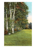 White Birches, Bolton-on-Lake George, New York Posters