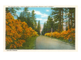 Golden Trail, Seaside, Oregon Posters