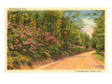 Rhododendron Drive, Pennsylvania Posters