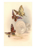 Drunken Butterflies Posters