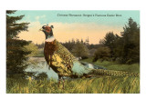 Chinese Pheasant, Oregon Game Bird Poster