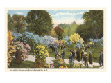 Lilac Day, Highland Park, Rochester, New York Prints