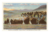 Buffalo Stampede, Yellowstone National Park Art