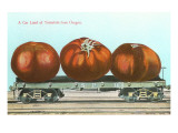Giant Tomatoes on Flat Bed Posters