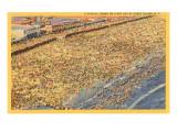 Crowded Beach, Coney Island, New York City Print