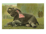 Elephant with Flag, Zoo in Cleveland, Ohio Posters