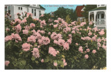 Rose Garden, Portland, Oregon Prints